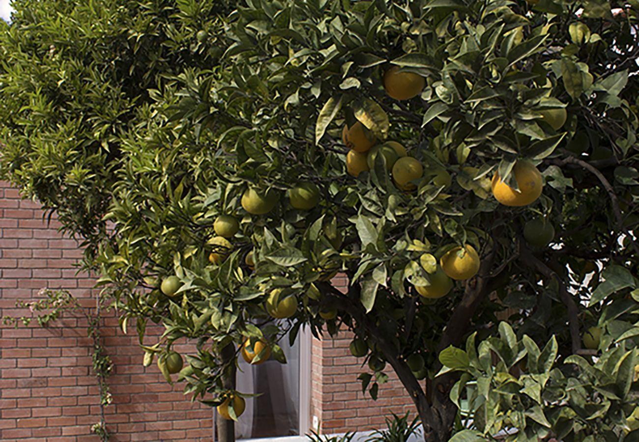 Citronnier du jardin de l'appartement de location pour un séjour à Lisbonne